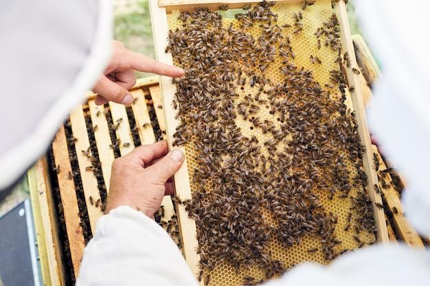 Pszczelarze badają ul