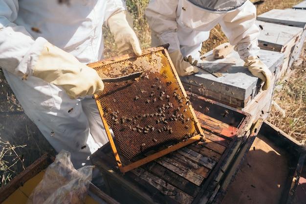 Pszczelarze pracujący przy zbieraniu miodu