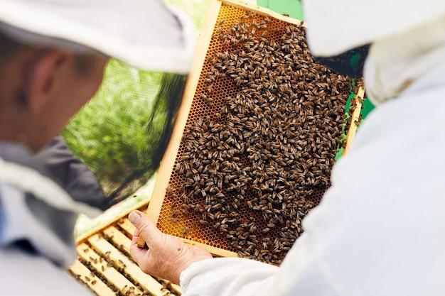 Pszczelarze sprawdzają ul