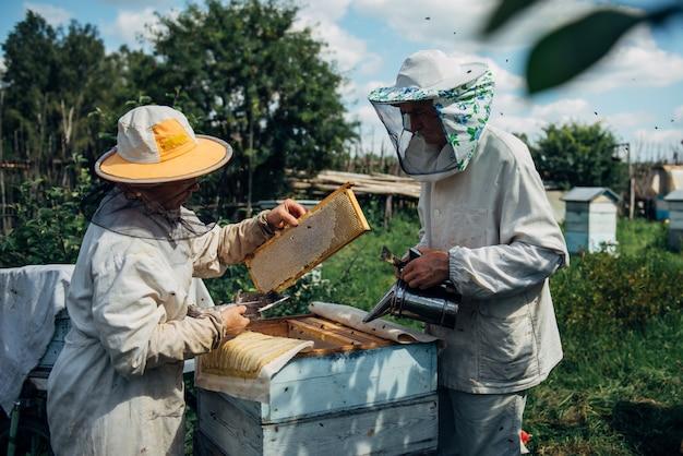 Pszczelarze w ochronnej odzieży roboczej sprawdzającej ramkę o strukturze plastra miodu w pasiece