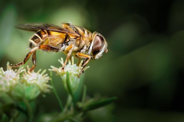 Pszczoła i kwiat
