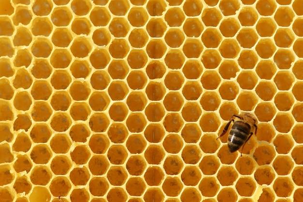 Pszczoła na plastrze miodu
