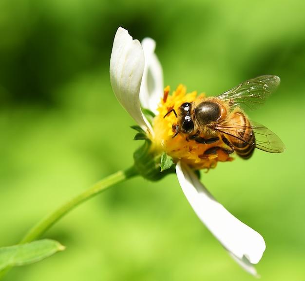Pszczoła na zielonym tle kwiatów