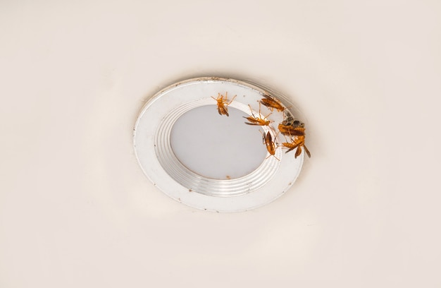 Pszczoła próbuje zbudować swój dom