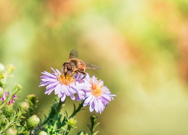 Pszczoła przechodzi od kwiatu do kwiatu zapylając w miarę upływu czasu
