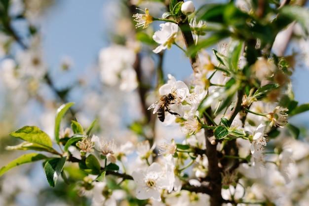 Pszczoła siedzący na kwiacie