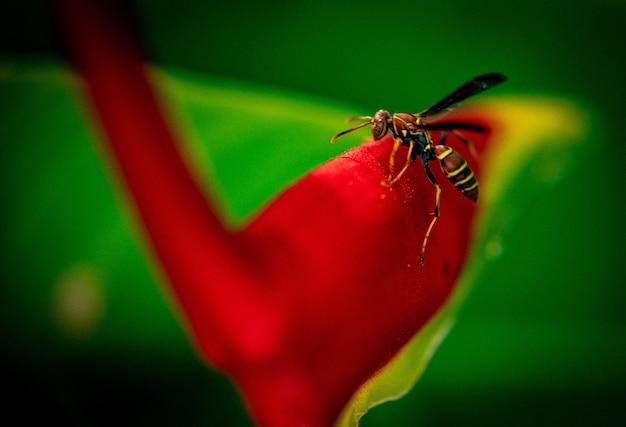 Pszczoła siedzi na jasnoczerwonym kwiatku w ogrodzie