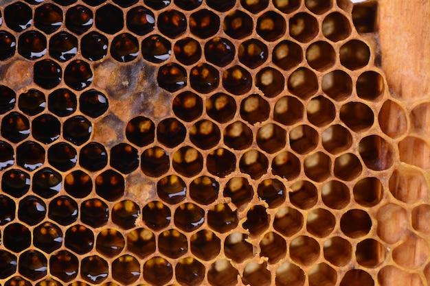 Pszczoła tekstura plastra miodu
