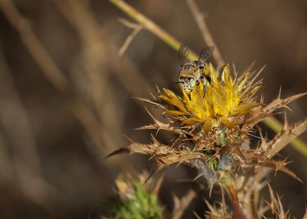 Pszczoła z kukułką w swoim naturalnym środowisku.