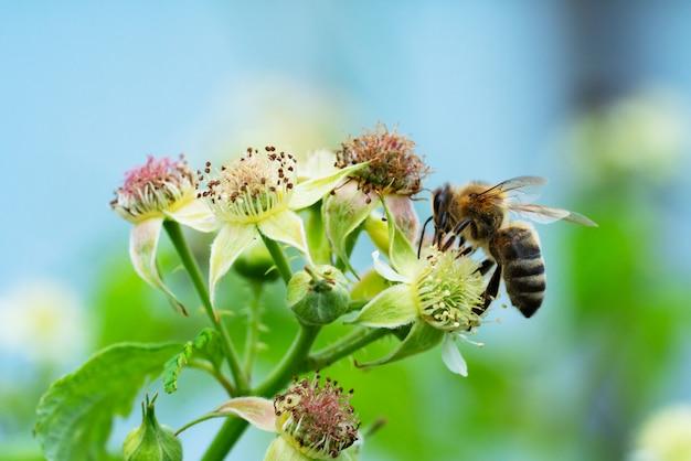 Pszczoła zbierająca pyłek w letnim słońcu