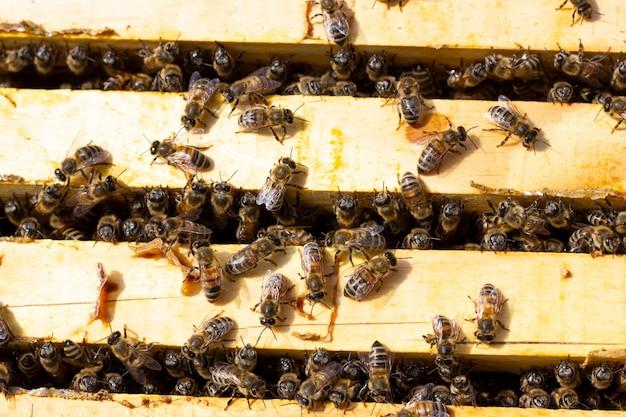 Pszczoły czołgają się na drewnianej ramie z miodem, zbliżenie.