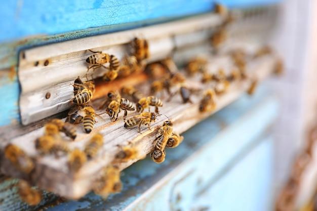 Pszczoły miodne wchodzące do ula