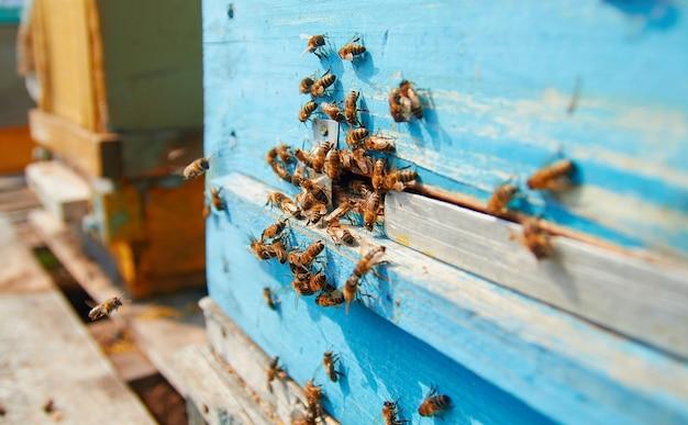 Pszczoły na drewnianym ulu