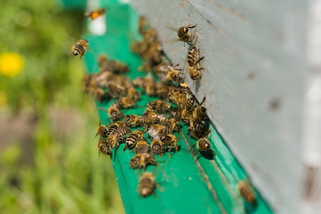 Pszczoły na drewnie