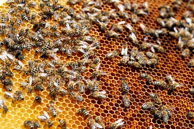 Pszczoły na golden honeycomb