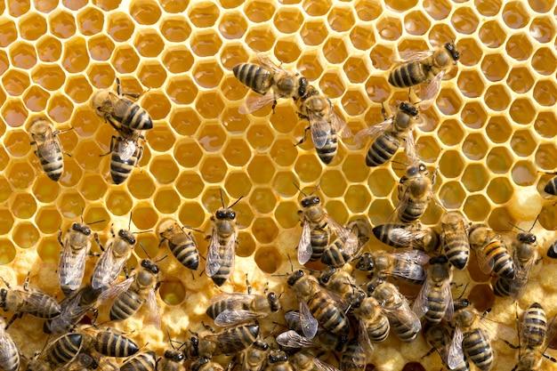 Pszczoły na komórkach miodu