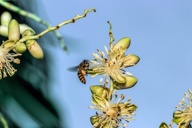 Pszczoły na kwiatach palm
