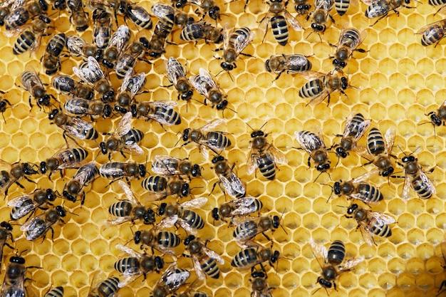 Pszczoły na makro golden honeycomb