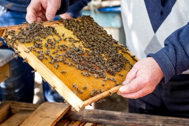 Pszczoły na ramie o strukturze plastra miodu. pszczelarz trzyma w rękach ramę o strukturze plastra miodu