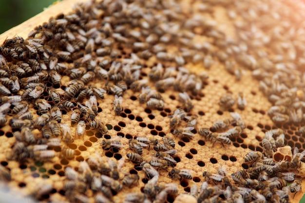 Pszczoły na ramie z plastrami miodu robią miód z pyłku