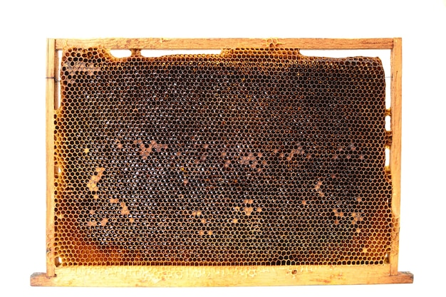Pszczoły o strukturze plastra miodu