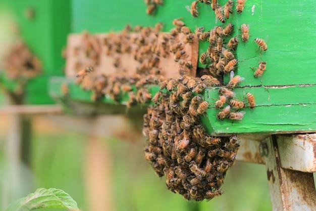 Pszczoły w ulu na zewnątrz