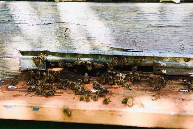 Pszczoły wlatują do wejścia do ula przynosząc pyłek. pszczoły przy wejściu do ula z bliska. przedni widok.