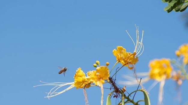 Pszczoły zapylające kwiaty i błękitne niebo