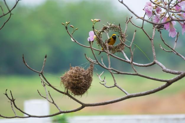 Ptak buduje gniazdo.