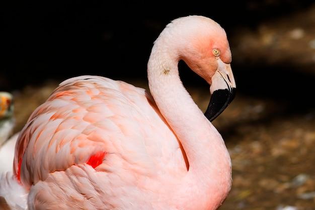 Ptak flamingo