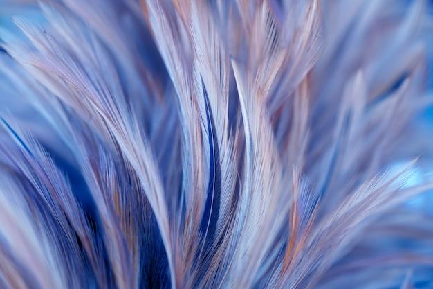 Ptak i kurczęta pióra w miękkim i rozmytym stylu dla tła