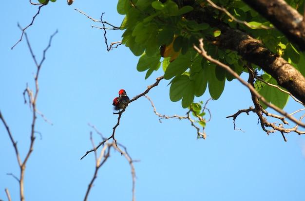 Ptak jest na gałęzi i błękitne niebo.