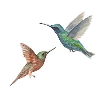 Ptak koliber akwarela handdrawn ilustracja