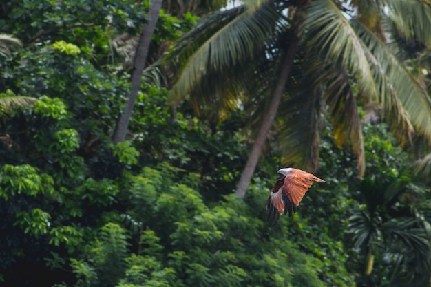 Ptak latający z drzewami w tle