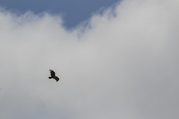 Ptak latający