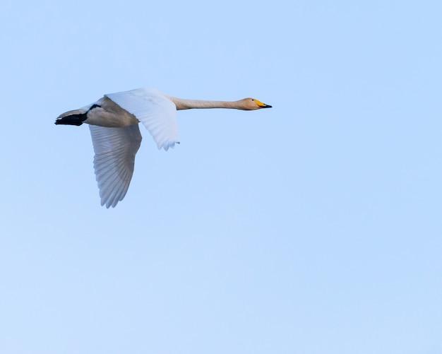 Ptak lecący po niebie