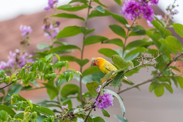 Ptak (lovebird) na drzewie w naturze dzikiej