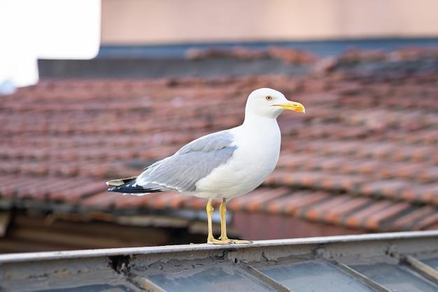 Ptak mewa na zewnątrz dachu