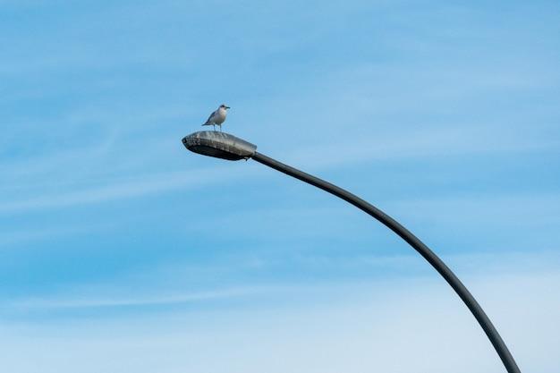 Ptak morski siedzący na słupie oświetlenia ulicznego na tle błękitnego nieba