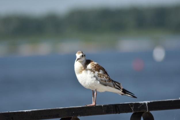 Ptak na brzegu rzeki z bliska