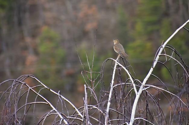 Ptak na drzewie. zwierzę w naturze. naturalne kolorowe tło.