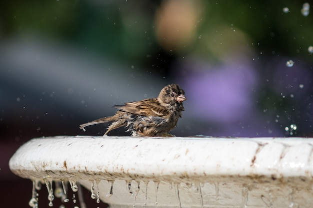 Ptak na fontannie