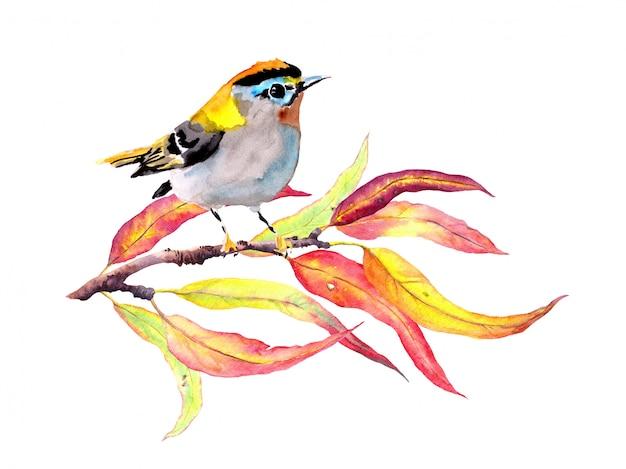 Ptak na gałęzi jesienią z czerwonymi i żółtymi liśćmi. akwarela ilustracja