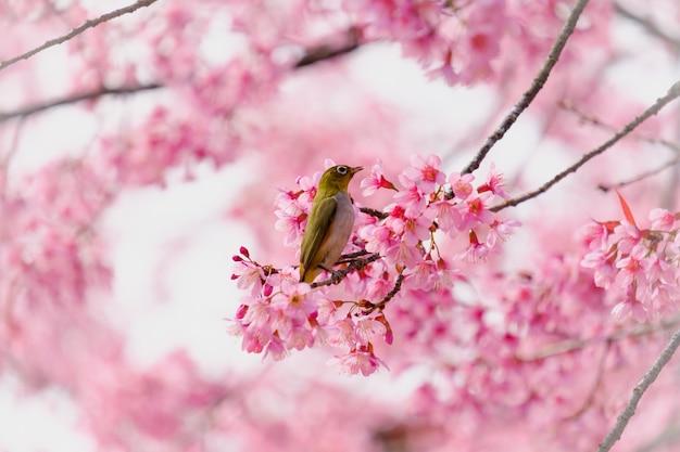 Ptak na gałęzi wiśniowego drzewa