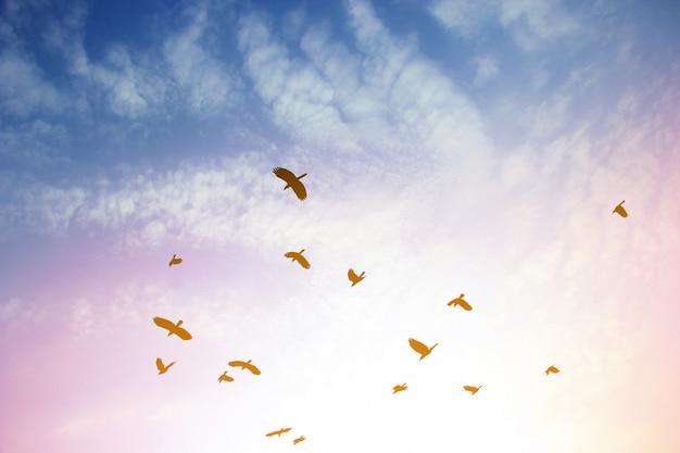 Ptak na niebie