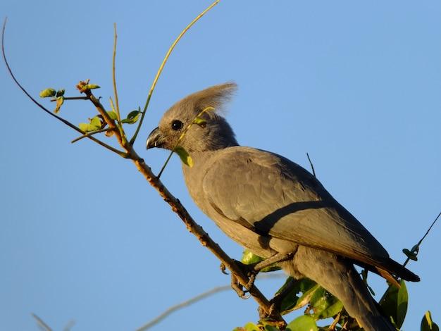 Ptak na safari w chobe parku narodowym, botswana, afryka