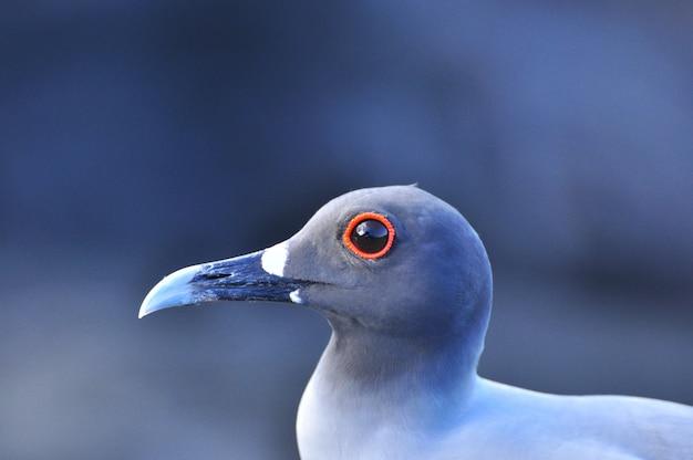 Ptak na wyspie galapagos w san cristobal