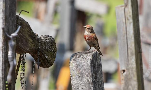 Ptak na wzgórzu krzyży