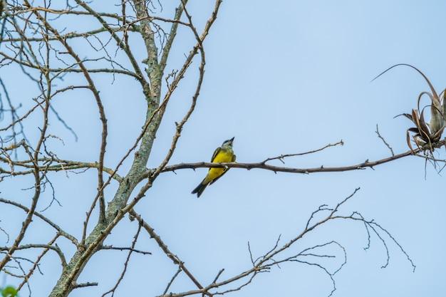 Ptak odpoczywa na drzewie