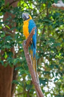 Ptak papuga siedząca na okoni